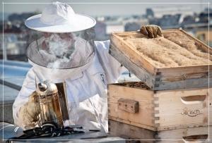 warum werden Bienen eingeraucht?