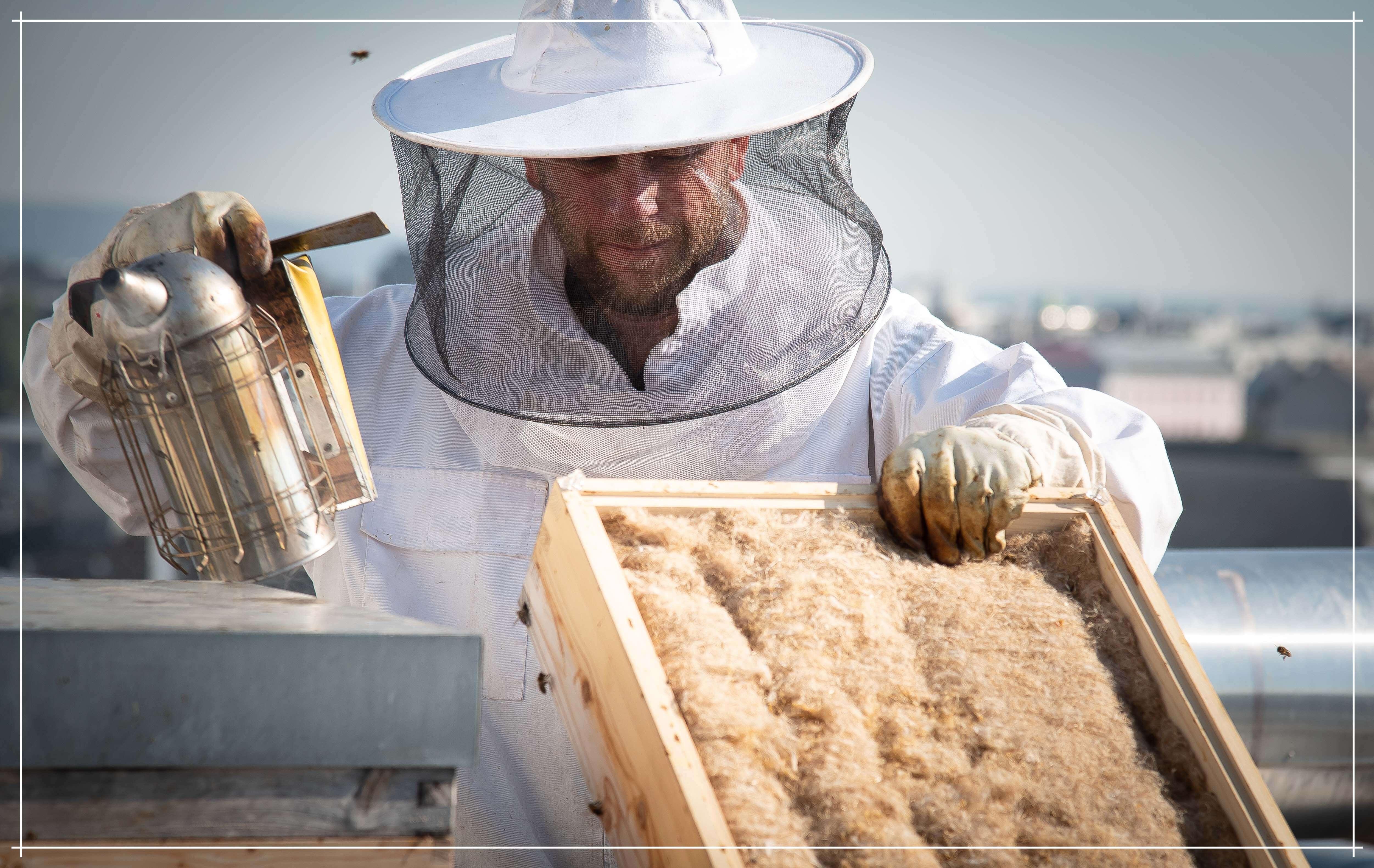 Warum raucht man die Bienen ein? schlawienerKLÄRT