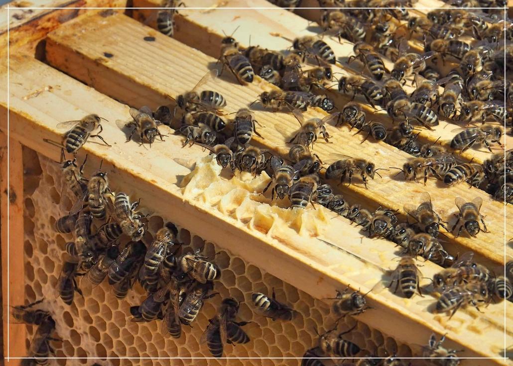 Wie Bienen durch den Winter kommen, erfährst du hier.