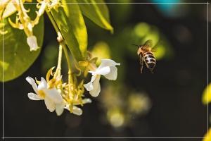 Je nach Zusammensetzung des Pflanzennektars den die Bienen ernten, variiert auch der Geschmack und das Aroma.